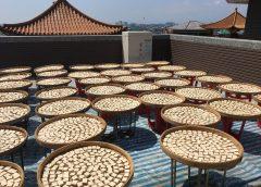 蘭陽仁愛之家年度盛事  義工齊作豆腐乳義賣